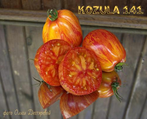 KOZULA-141-Albenga-x-Copia-K1041eb74017c97fb5766.jpg