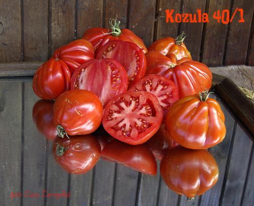 KOZULA-40-1-Albenga-x-Big-Zebra-K104960b7fffef2317a72.jpg