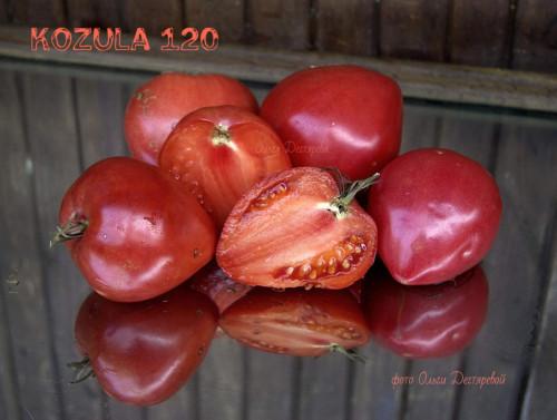 Kozula120
