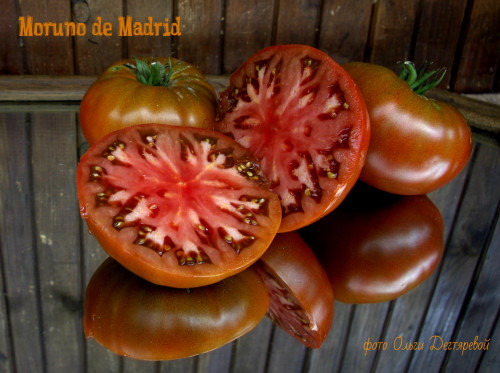 Moruno-de-Madrid-M121622d4fd305f47c1ca.jpg
