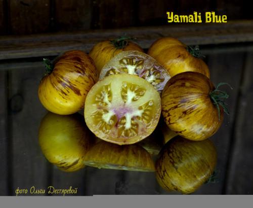 Yamali-Blue7091ef4b434618e0.jpg