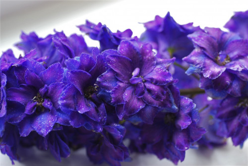 Pagan-Purple8944e0127e7eeee70.jpg